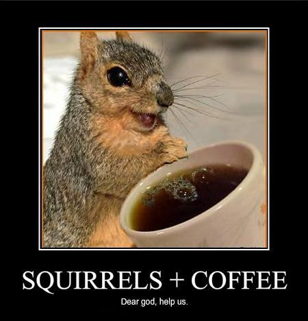 squirrel coffee